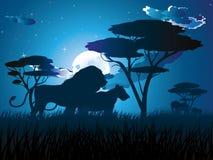 Afrikanische Nacht mit Löwe Stockfotos
