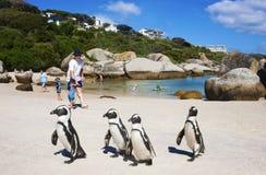 Afrikanische Pinguine auf Flussstein-Strand Lizenzfreie Stockfotografie