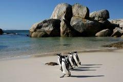 Afrikanische Pinguine an den Fluss-Steinen Stockfotos