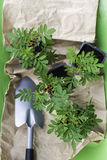 Afrikanische Ringelblume tagetes Sämlinge in den kleinen schwarzen Töpfen mit schwarzem Boden, Kelle auf dem Papierhintergrund Lizenzfreie Stockfotos
