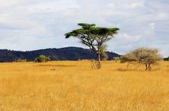 Afrikanische Savanne Stockbild