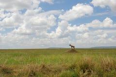 Afrikanische Savanne lizenzfreie stockfotografie