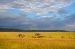 Afrikanische Savannenlandschaft, Masai Mara, Kenia, Afrika lizenzfreie stockfotografie