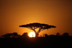 Afrikanische Savannensommer pictrures wilde Safari Tansania Ruanda Botswana Kenia Stockfoto