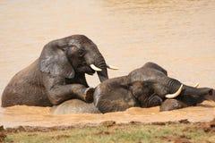 Afrikanische schwimmende Elefanten lizenzfreie stockfotografie