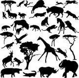 Afrikanische Tiere Stockbild