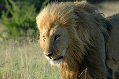 Afrikanische wild lebende Tiere Lizenzfreie Stockfotografie