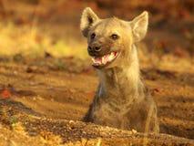 Afrikanische wild lebende Tiere Stockbilder