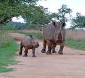 Afrikanische wild lebende Tiere: Weißes Nashorn Lizenzfreies Stockbild
