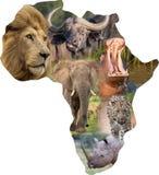 Afrikanische wilde Säugetiere in einer Afrika-Collage Stockbilder
