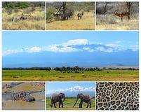 Afrikanische wilde Tiere Stockfoto