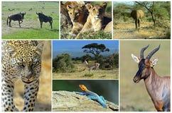 Afrikanische wilde Tiere Stockbilder