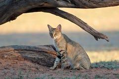 Afrikanische Wildkatze - Kalahari-Wüste Lizenzfreie Stockfotografie
