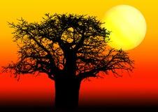 Afrikanischer Baobabbaum im Sonnenuntergang Stockfotografie