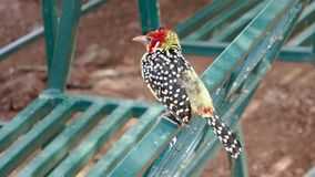 Afrikanischer bunter Vogel Lizenzfreies Stockbild