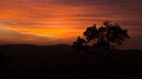 Afrikanischer Buschsonnenuntergang Lizenzfreies Stockbild