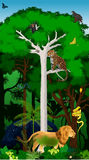 Afrikanischer Dschungelregenwald der Vektor-Illustration mit Tieren Stockbilder