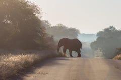 Afrikanischer Elefant-Überfahrt-Straße Stockfotos