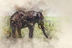 Afrikanischer Elefant in der Savanne von Ngorongoro-Krater stockbild