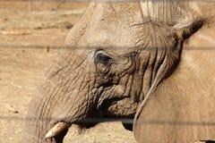 Afrikanischer Elefant hinter Gittern Lizenzfreie Stockfotos