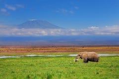 Afrikanischer Elefant mit Kilimanjaro im Hintergrund stockbild
