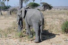 Afrikanischer Elefant mit Savannewaldland - Tanzania Lizenzfreie Stockfotografie