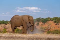 Afrikanischer Elefant in Nationalpark Chobe Lizenzfreies Stockfoto
