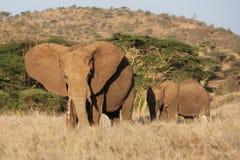 Afrikanischer Elefant und Kind Lizenzfreies Stockbild
