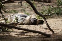 Afrikanischer gemalter entspannender Hund lizenzfreie stockfotografie