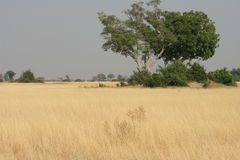 Afrikanischer Hintergrund Lizenzfreie Stockfotografie