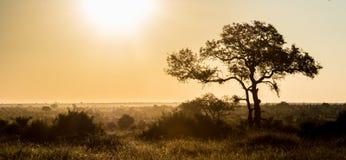 Afrikanischer Hintergrund lizenzfreies stockbild