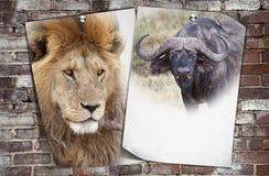 Afrikanischer Hintergrund der wild lebenden Tiere stockbild