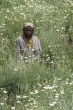 Afrikanischer Junge auf einem Gänseblümchengebiet Stockbild