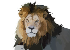 Afrikanischer Löwe lizenzfreie abbildung