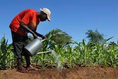 Afrikanischer Landwirt stockfotos
