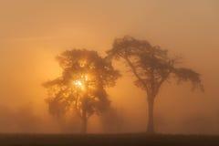 Afrikanischer Sonnenaufgang Stockfotografie