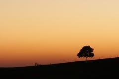 Afrikanischer Sonnenaufgang mit einsamem Baum Stockbilder