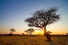 Afrikanischer Sonnenuntergang Stockfoto
