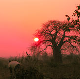 Afrikanischer Sonnenuntergang lizenzfreies stockfoto