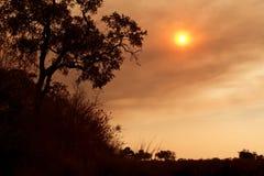 Afrikanischer Sonnenuntergang auf den Savanneebenen Stockfotografie