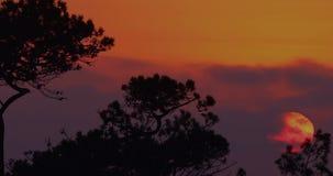 Afrikanischer Sonnenuntergang durch die Bäume stock video footage
