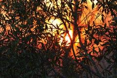 Afrikanischer Sonnenuntergang im Nationalpark Kruger, Südafrika Lizenzfreie Stockfotografie