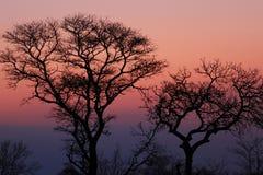 Afrikanischer Sonnenuntergang im Nationalpark Kruger, Südafrika Stockbild