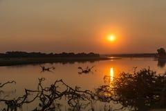 Afrikanischer Sonnenuntergang mit Bäumen in der Landschaft lizenzfreie stockbilder