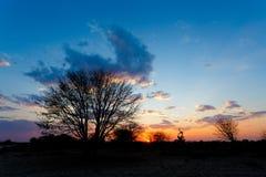 Afrikanischer Sonnenuntergang mit Baum in der Front Stockfotografie