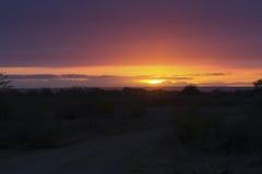 Afrikanischer Sonnenuntergang mit einem Baumschattenbild und einer großen orange Sonne Lizenzfreie Stockfotos