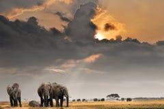 Afrikanischer Sonnenuntergang mit Elefanten Lizenzfreie Stockfotos