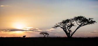 Afrikanischer Sonnenuntergang mit Gnu, Südafrika lizenzfreies stockfoto