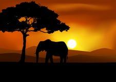 Afrikanischer Sonnenunterganghintergrund mit Elefanten Stockfotos