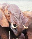 Afrikanischer spalshing Elefant Lizenzfreies Stockfoto